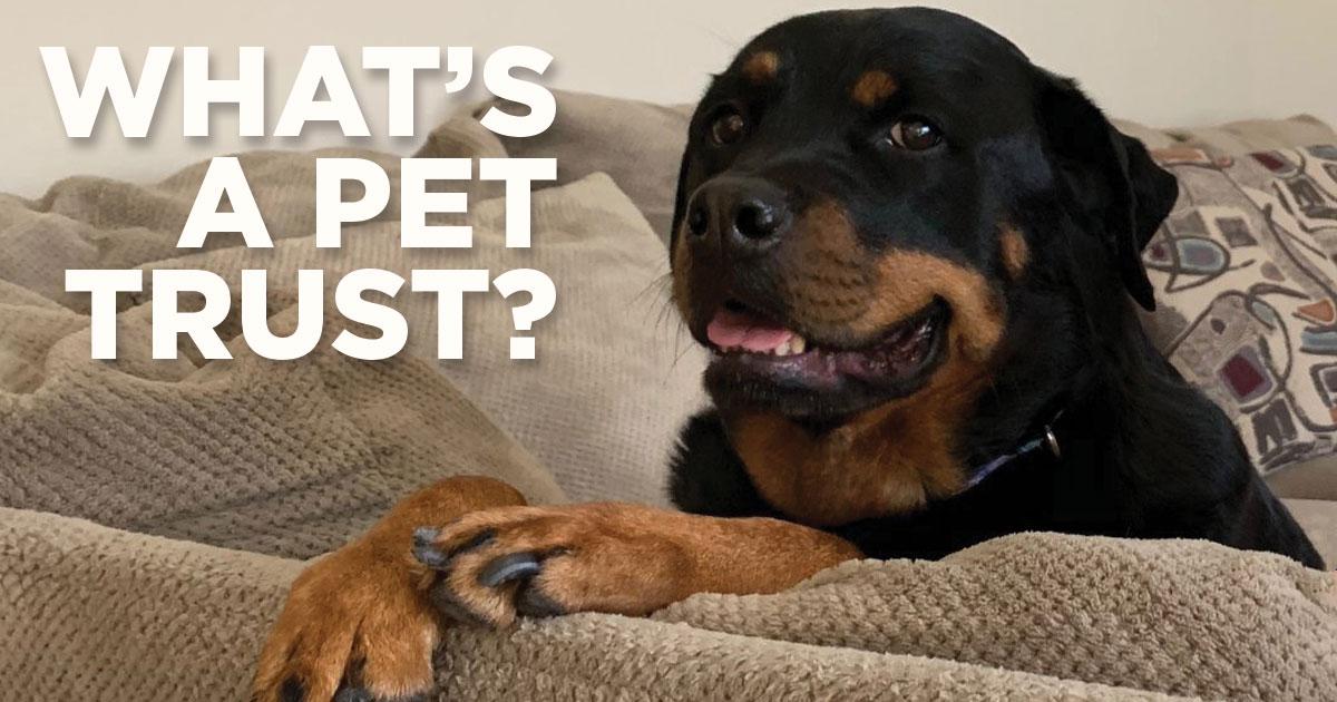 pet-trust